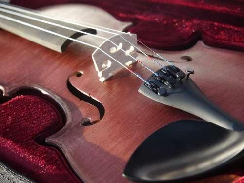 violon 3/4 acajou Rigozetti