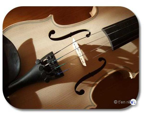 violon sylvicole brut